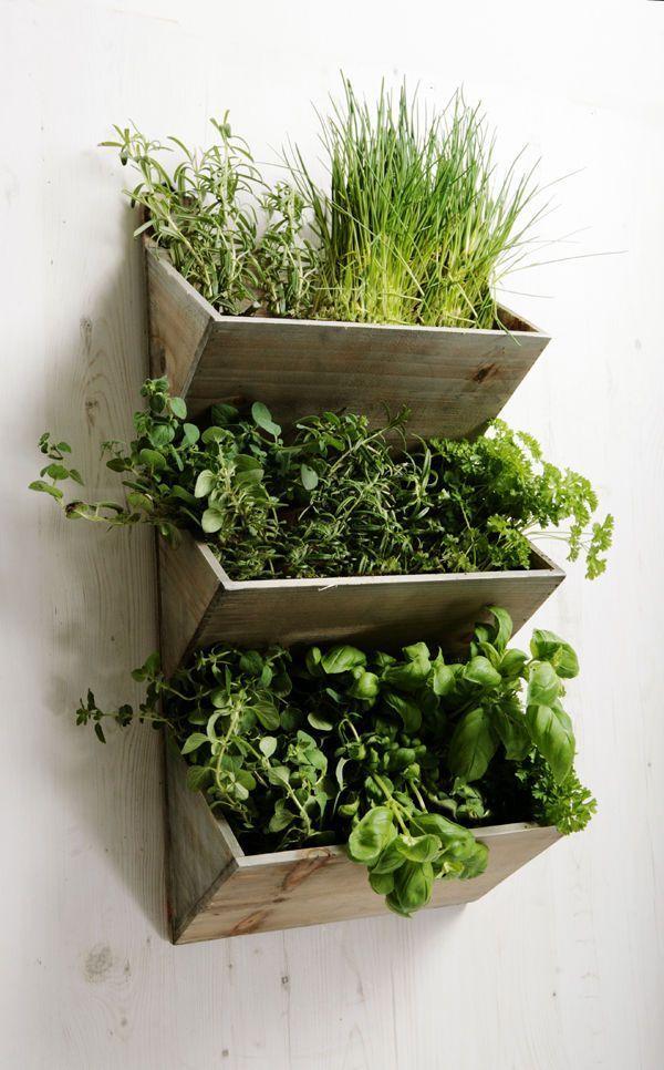 jardin vertical cajn - Jardineras Verticales
