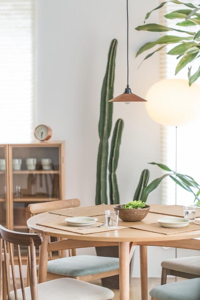 Los cactus como plantas de interior