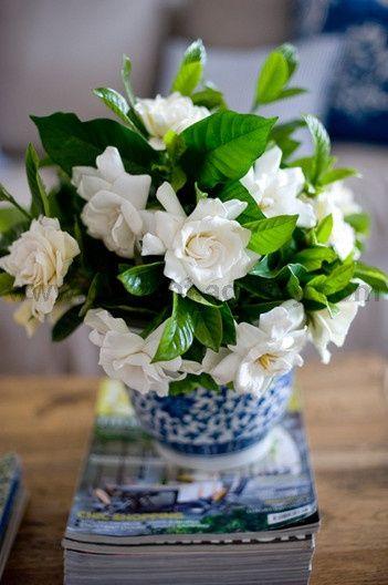 Gardenias para aromatizar tu hogar