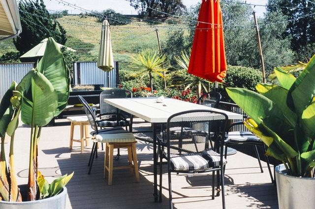 Decora tu casa con plantas