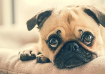 Prepara tu hogar para la llegada de un perro